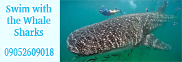Cebu Philippines Travel - Whale Shark