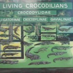 Living Crocodilians