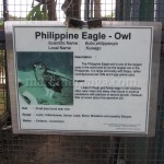 Philippine Eagle-Owl Information