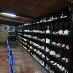 Shell Collection at the Back Room