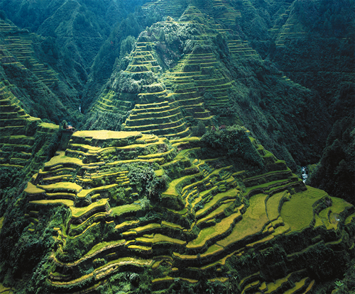 Beauty of the Banaue Rice Terraces