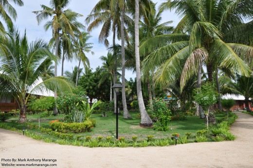 Garden with Palm Trees, Coconuts and Flowers