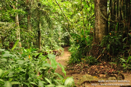 The Philippine Eagle Center Forest