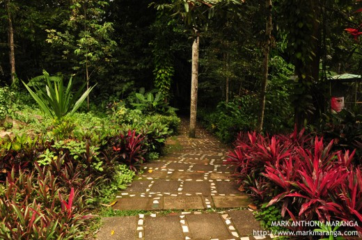 The Pavement at Philippine Eagle Center