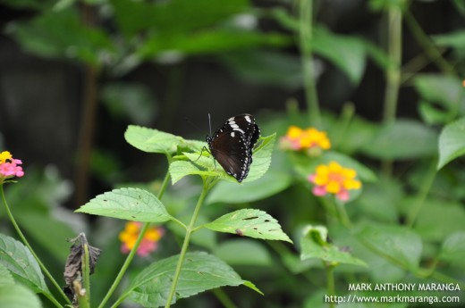Davao Butterfly House