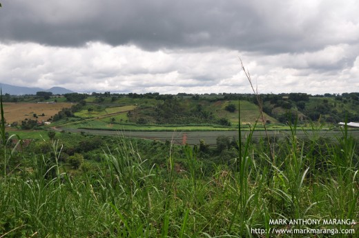 A view of Pineapples, Grasses, Trees of Bukidnon's Mountain
