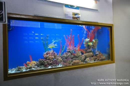 One of the Aquariums