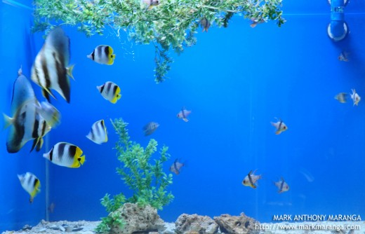 Some of the Fishes in Mactan Aquarium