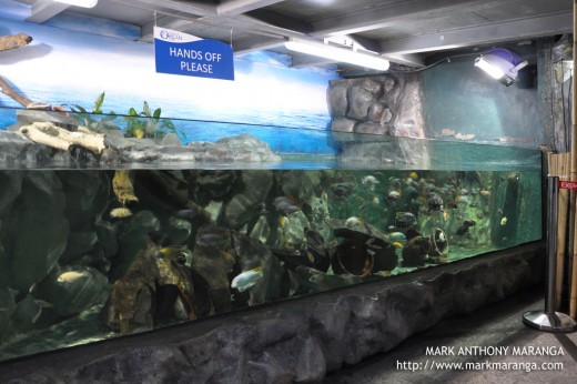 Aquarium with a variety of small fishes