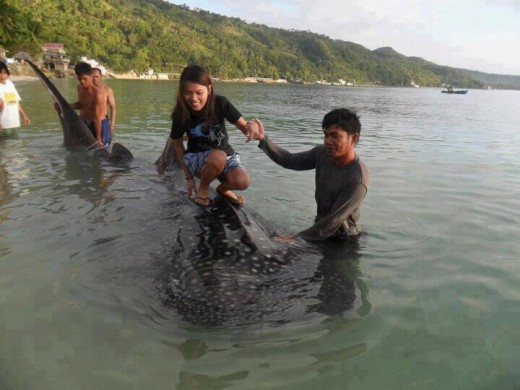 Girl standing on top of a Whale Shark