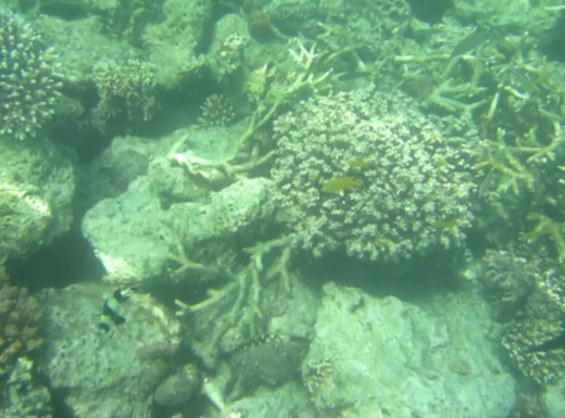 Some of the Corals and Fishes we saw Underwater
