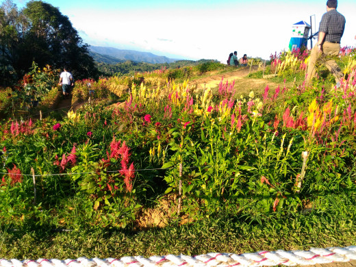 Another view of the Sirao Flower Farm