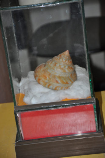 Preserved Shell